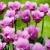 Квітчастий